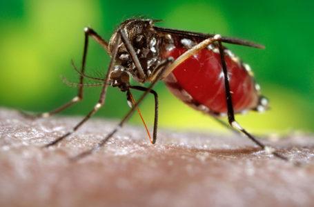 Confirman dos casos de dengue en Iquique en personas provenientes desde Bolivia