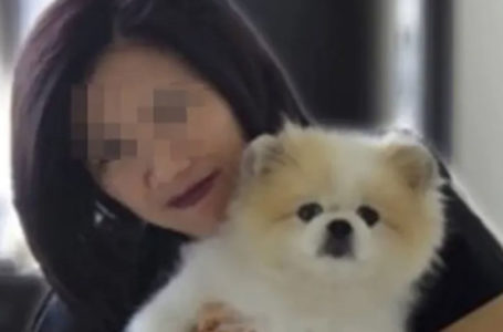 Murió en Hong Kong el perro que había dado positivo por coronavirus